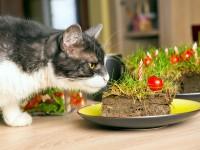 Почему кот ест землю?