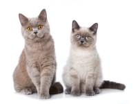 Что делать если кошка хочет кота — как успокоить