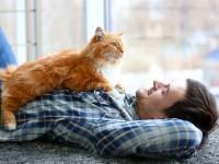 Почему кот ложится на человека?