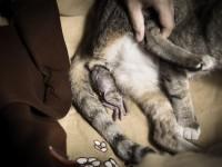 Может ли кошка родить не всех котят сразу?