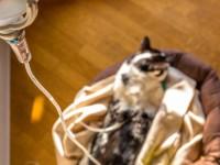 Из-за чего повышается мочевина в крови кота?