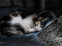 Как успокоить кота ночью?