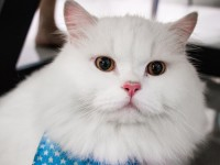 Как лечить камни в мочевом пузыре у кота?