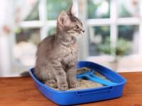 Катетеризация мочевого пузыря кота