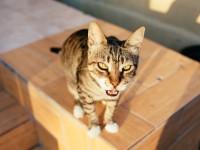 У кошки рвота желчью