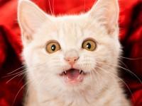 Как самостоятельно определить возраст котенка?