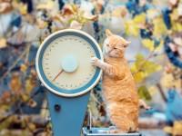 Какой средний вес кота?