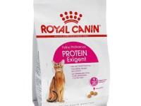 Как давать протеин кошке?
