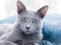 Что делать, если у кота красная моча?