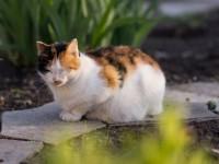 Что делать, если у беременной кошки понос?