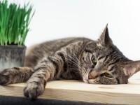 Что будет если кошка съест отравленную мышь