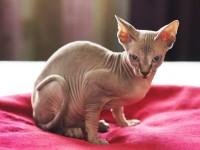 Почему кошки после стерилизации стают агрессивными