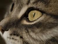 У кошки течет из носа прозрачная жидкость