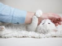 Опасность укуса кошки