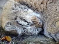 Как похоронить кошку зимой?