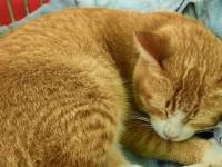 Что делать, если у кота шишка на спине под кожей?