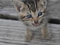 У кошки один зрачок узкий другой широкий