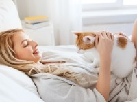 Почему кошки спят с хозяевами
