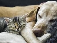 Как подружить между собой собаку и котенка