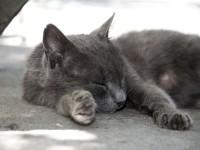 Что делать, если у кошки шишка на животе?
