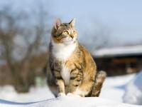 Сколько времени кошка носит котят