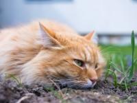 Как вывести глистов у кота