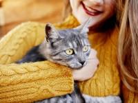 Стерилизация кошки во время течки