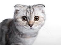 Если у кошки текут слюни — что это такое