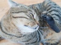 Признаки аллергии на блох у кошек