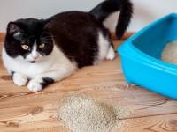 Какой наполнитель лучше для кота?