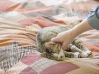 Что делать, если у кота пятна на ушах?