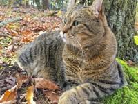 Самая долгоживущая кошка