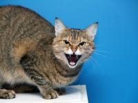 Что делать, если у кошки застряла кость в горле?