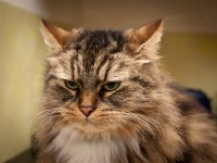 Что делать, если у кошки экзема?