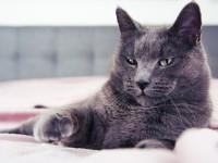 Болит ли у кошки голова?