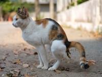 Что делать, когда кошка гадит где попало