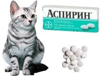 Можно ли кошке давать Аспирин?
