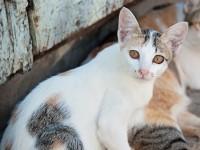 Как закапать капли в глаза коту