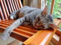 Что делать, если у кота глисты