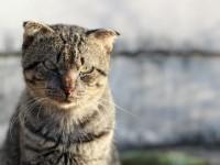 Признаки и лечение мочекаменной болезни у кота