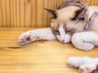 Болезнь от кошек токсоплазмоз