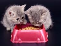Можно ли размачивать корм для кота?