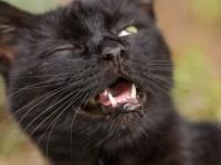 Почему у кота глаза наполовину закрыты пленкой