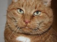 У кошки на спине болячки и выпадает шерсть