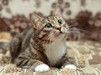 Что делать, если кот проглотил иголку?