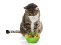 Кошка отказывается есть после стерилизации
