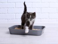 Причины и лечение поноса у кота
