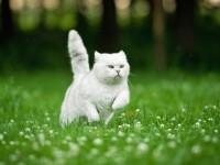Как лечить артрит у кошек?