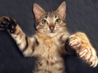 У кошки слоятся когти — как помочь