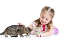 Чем опасная кошка для хозяина?
